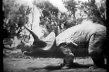 Willis O'Brien Triceratops (Evolution film)